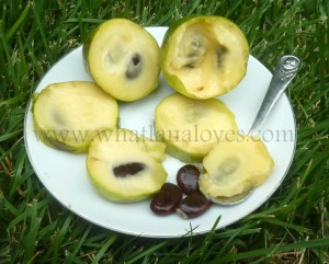Paw paw fruit (2)